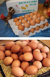 千産千消【地産地消】卵 〔 九十九里ファーム卵 〕